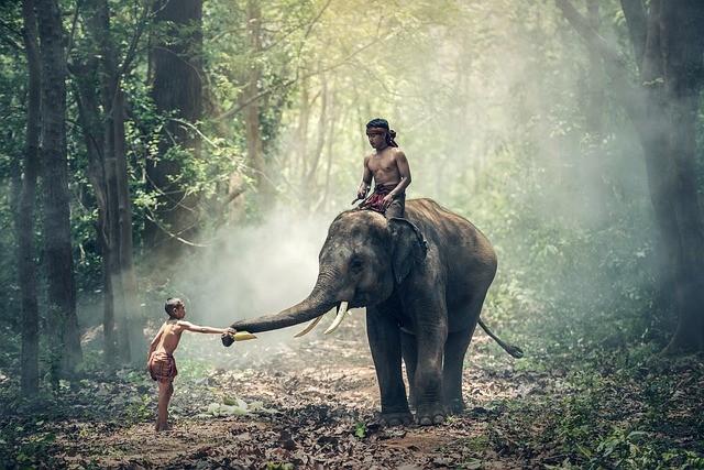 ช้างไทย ชัยภูมิ