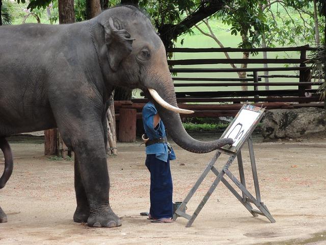 ฝึกช้างให้วาดรูป ทาสี ที่ลำปาง