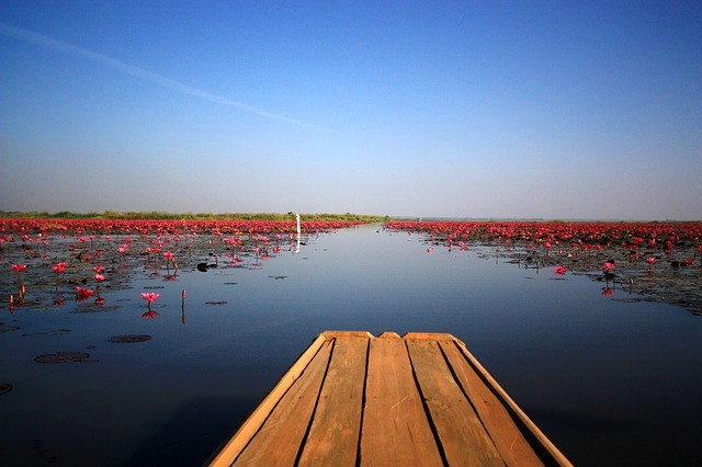 ทะเลบัวแดง